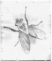 1966 Una mosca bianca